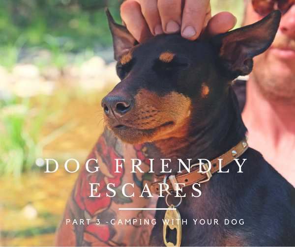 Where to camp with your dog in Melbourne Victoria Australia