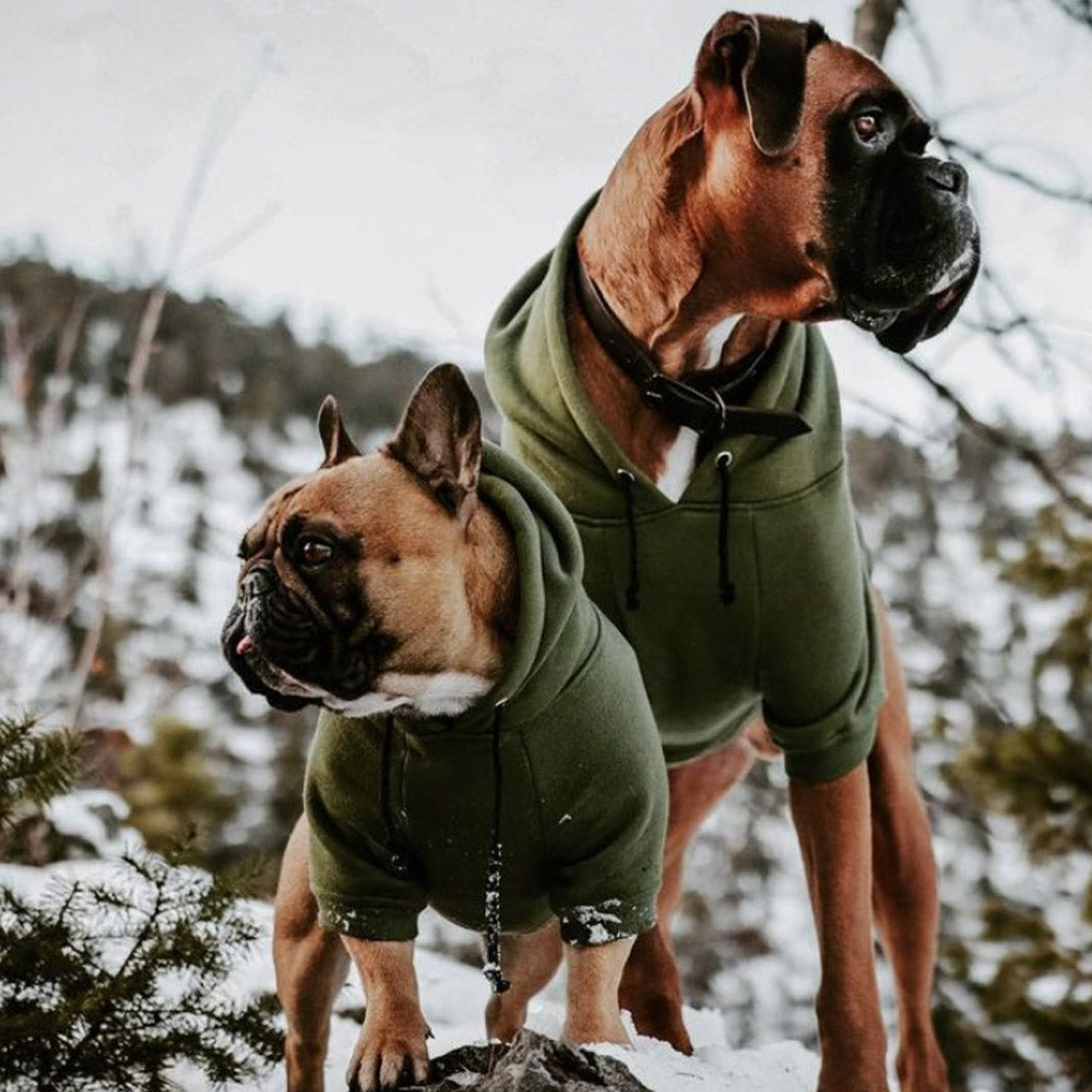 Green dog hoodie by Pethaus Australia