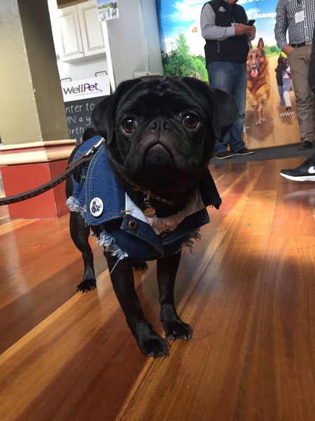 Melbourne Dog Lovers Show 2017