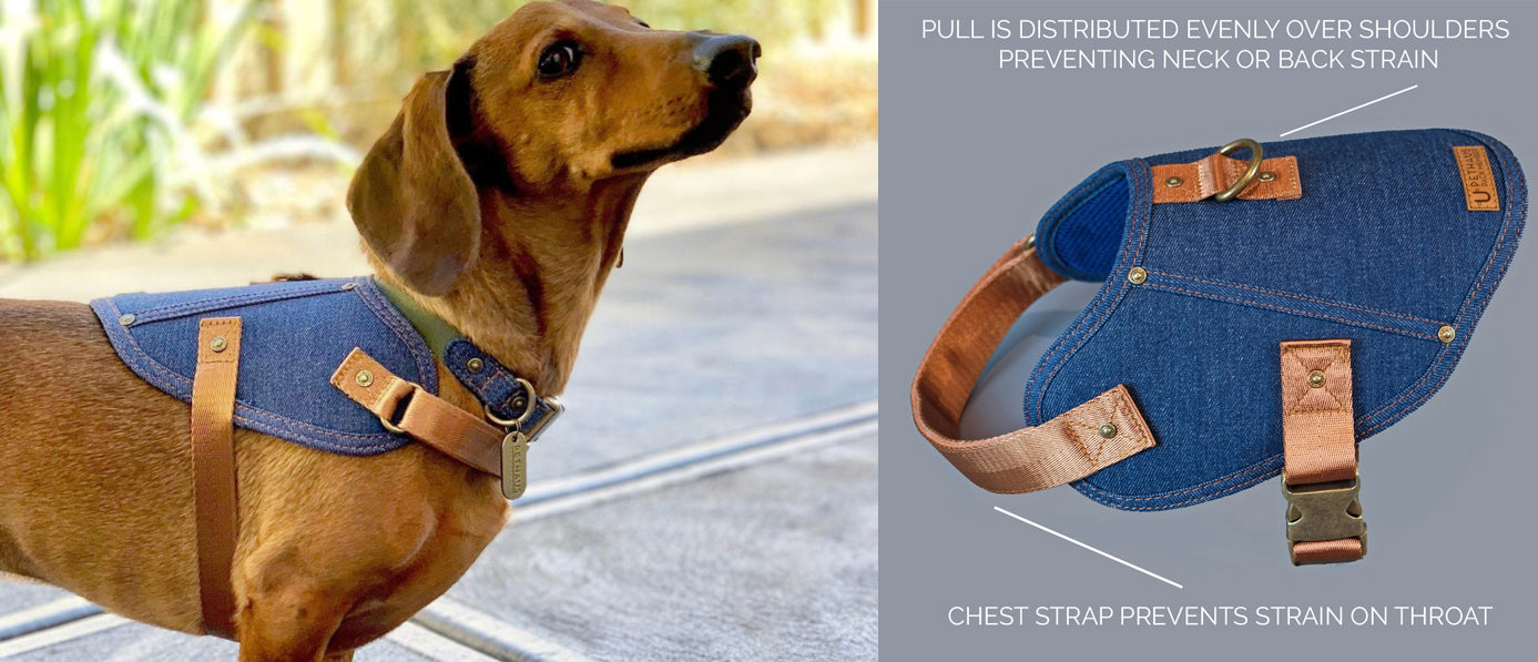DOG HARNESS TO PREVENT NECK AND BACK INJURY