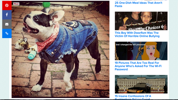 Dogs in denim Buzzfeed