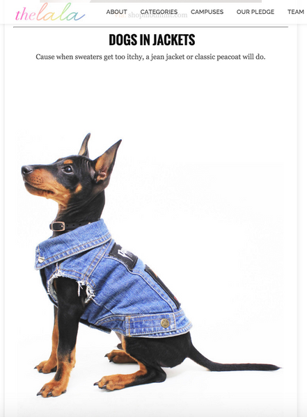 Denim Dog Vest Pethaus