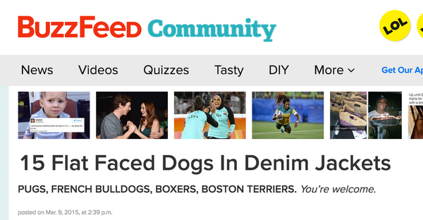 Dog Denim Buzzfeed