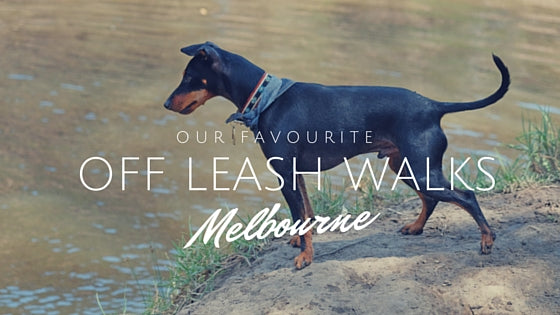 Off leash Dog Walks Melbourne