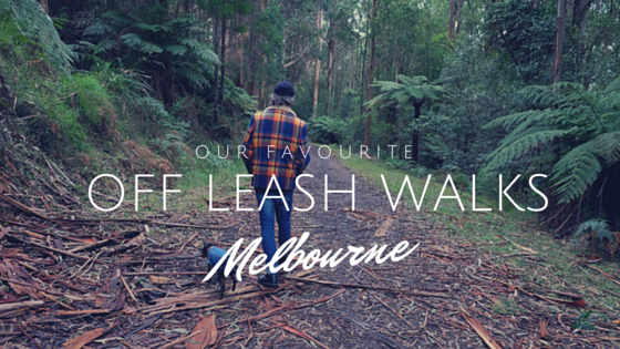 Dog friendly walks Melbourne