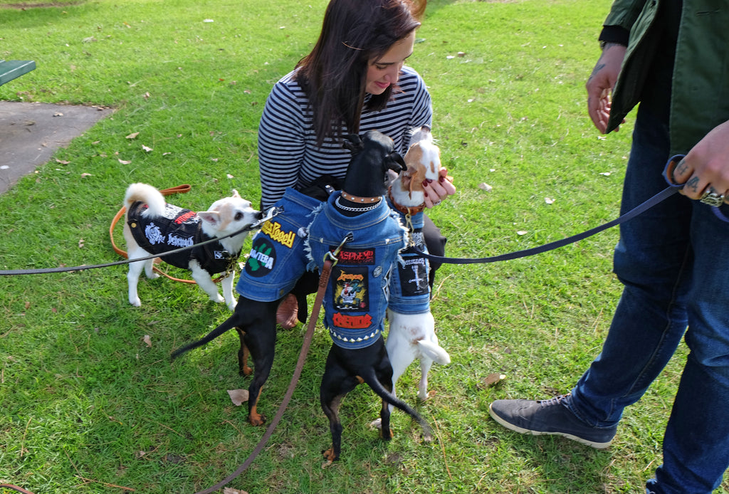 RSPCA Million Paws Walk Albert Park 2017