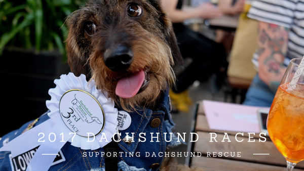 Dachshund Races at Hophaus Melbourne 2017