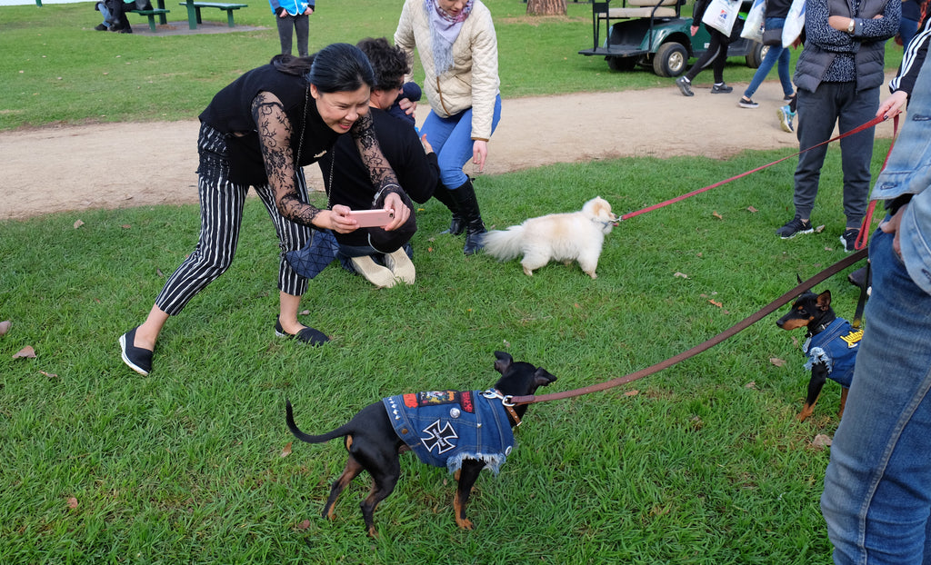 Million Paws Walk Albert Park 2017