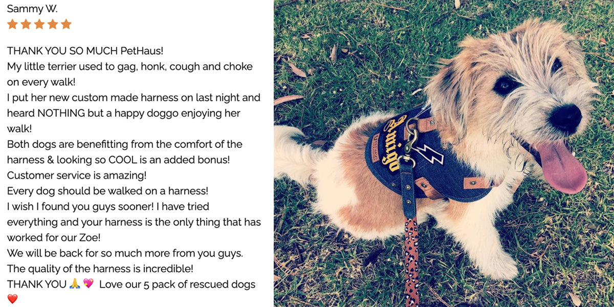 Dog harness review happy customer