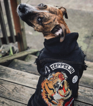 Denim dog coat with custom patches