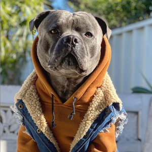 staffordshire terrier dog coat and dog hoodie by Pethaus