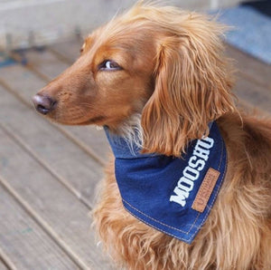 personalised dog bandana, denim dog bandana, custom dog bandana, australian dog bandana, designer dog bandana, cool dog bandana, pethaus