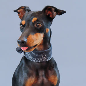 paisley dog bandana, black paisley bandana, australian dog bandana, Biker dog bandana, in dog we trust bandana, english toy terrier
