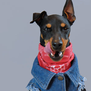 paisley dog bandana, red paisley dog bandana, australian dog bandana, in dog we trust bandana, biker dog bandana, english toy terrier, denim dog vest