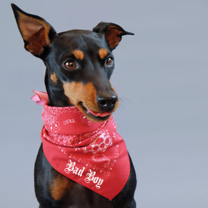 personalised dog bandana,paisley dog bandana, red paisley dog bandana, australian dog bandana, in dog we trust bandana, biker dog bandana,
