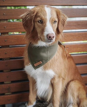 Army green dog bandana, khaki dog bandana, dog bandana with patches, dog patches, service dog