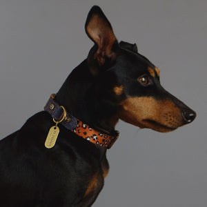 Denim dog collar, leopard print dog collar, quick release dog collar, nylon webbing dog collar, cool dog collar, Australian dog collar, pethaus, english toy terrier