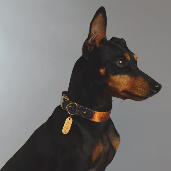 denim dog collar, tan dog collar, quick release dog collar, nylon webbing dog collar, cool dog collar, Pethaus, Australian dog collar, English Toy terrier