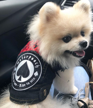 denim dog vest with Motorpooch patches, dog coat made in Australia