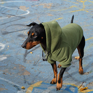 green dog hoodie by Pethaus