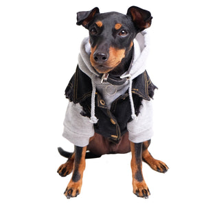Cool dog clothing.