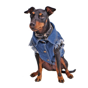 Denim dog vest , denim dog jacket, Pethaus, dog denim, Dog coat, Pethaus, Dog jacket, Australia dog coat