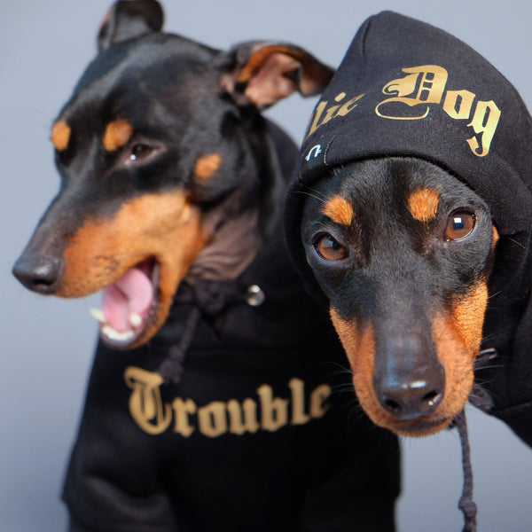 Dog hoodie, dog sweatshirt, dog coat, Personalised dog hoodie, Personalised dog sweatshirt, Black dog hoodie,Gangsta Yapper, Pethaus