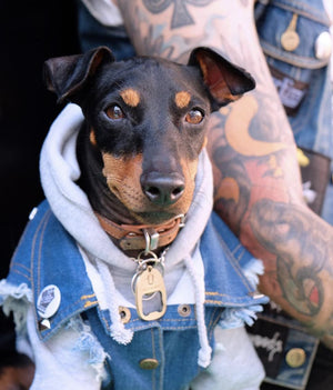 denim dog vest, cool dog, denim dog jacket