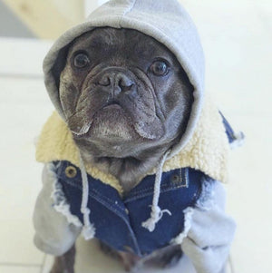 denim dog vest, denim dog jacket, dog gift, dog hoodie, pethaus