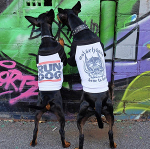 Motorhound dog tee, heavy metal dog tee, raglan dog tee, band tee for dog, motorhound, Pethaus