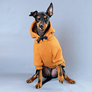Dog Hoodie, Pethaus dog hoodie, brown dog hoodie, dog sweatshirt, tan dog hoodie, tan dog sweatshirt, Hoodie for dog, English toy terrier