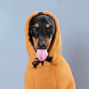 Dog Hoodie, Pethaus dog hoodie, brown dog hoodie, dog sweatshirt, tan dog hoodie, tan dog sweatshirt, Hoodie for dog, English Toy terrier, Toy manchester terrier