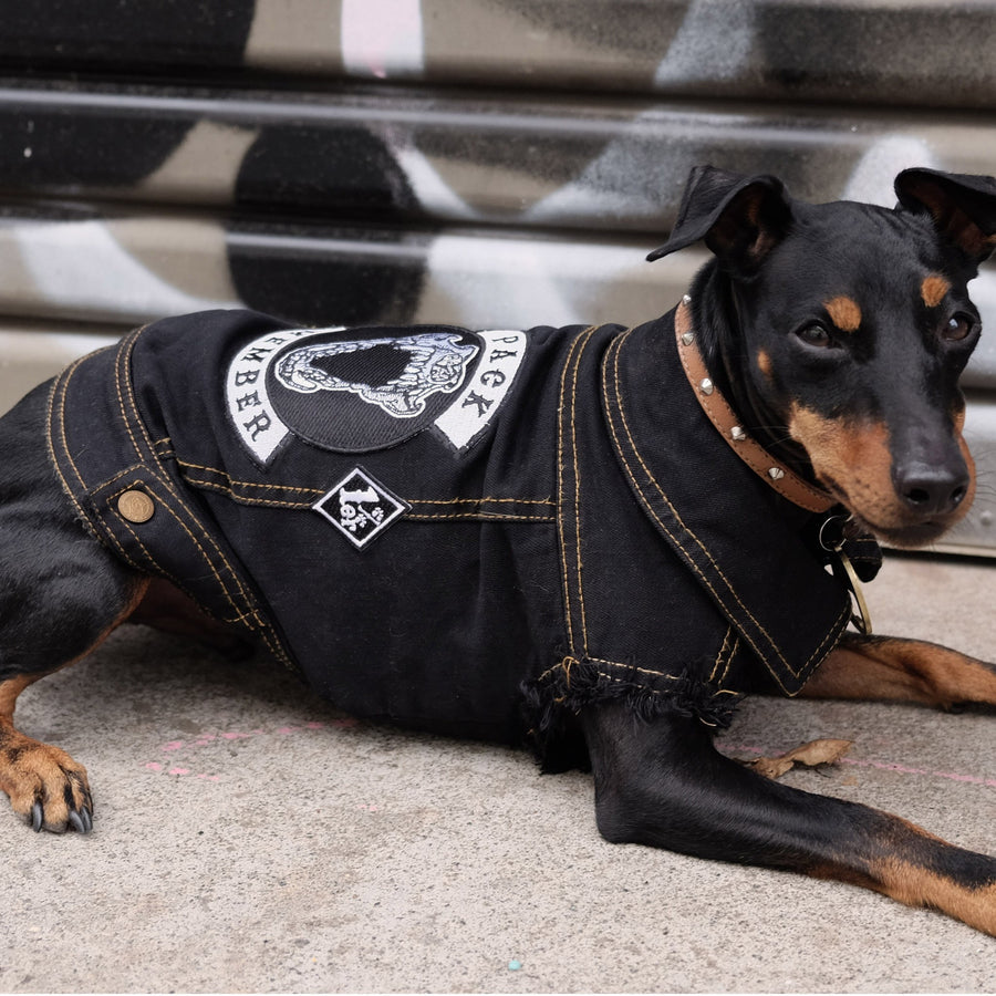 Denim Dog jacket by Pethaus