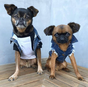 Denim dog vest by Pethaus.
