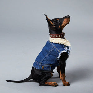 Denim dog vest, denim dog jacket Pethaus, sherpa denim dog vest, dog gift, dog coat australia, dog jacket