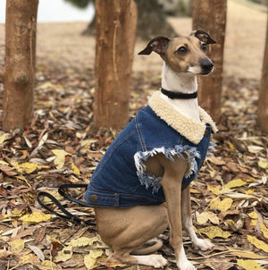 denim dog vest, denim dog jacket, sherpa denim dog vest