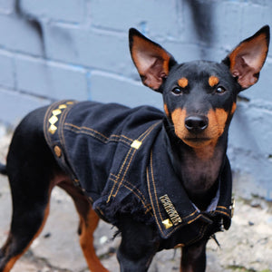 Designer dog clothing Melbourne Australia