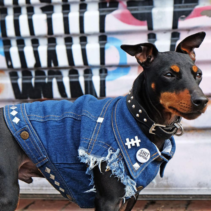 Studded denim dog vest