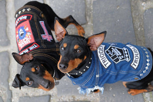 Dog denim vest with custom rocker patches