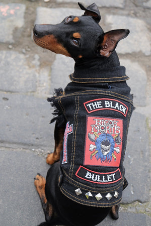 Heavy metal dog wearing Denim dog vest