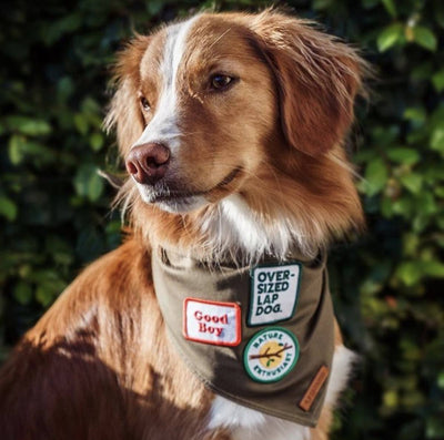 dog patches, embroidered patch for dog, Good boy patch, Scouts honour patch.
