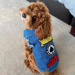 Denim dog vest, cool dog coat by Pethaus