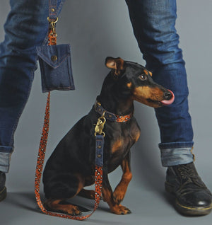 denim dog collar, denim dog leash, denim dog lead, designer dog collar, designer dog lead, dog poop bag holder, Australian dog collar and leash, designer dog walk wear, english toy terrier, denim dog harness