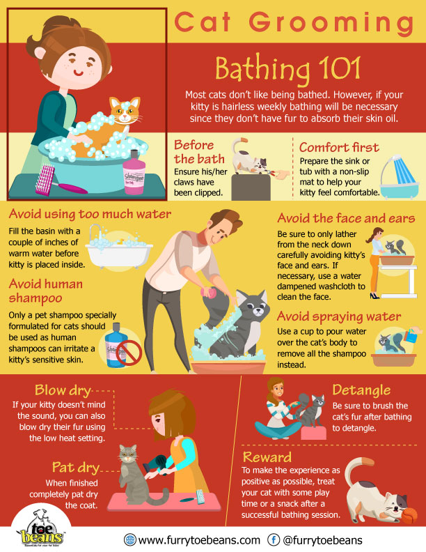 Bathing tips for cats and kittens