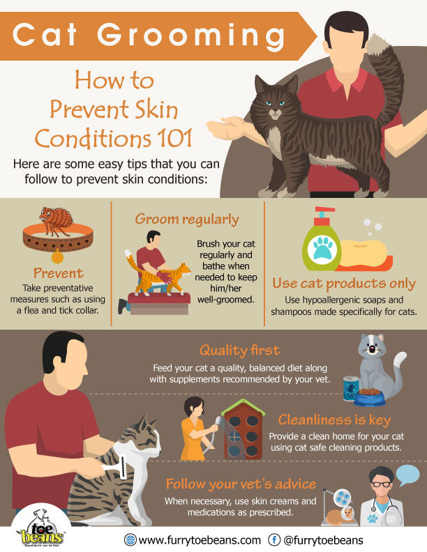 Common skin conditions in cats and kittens