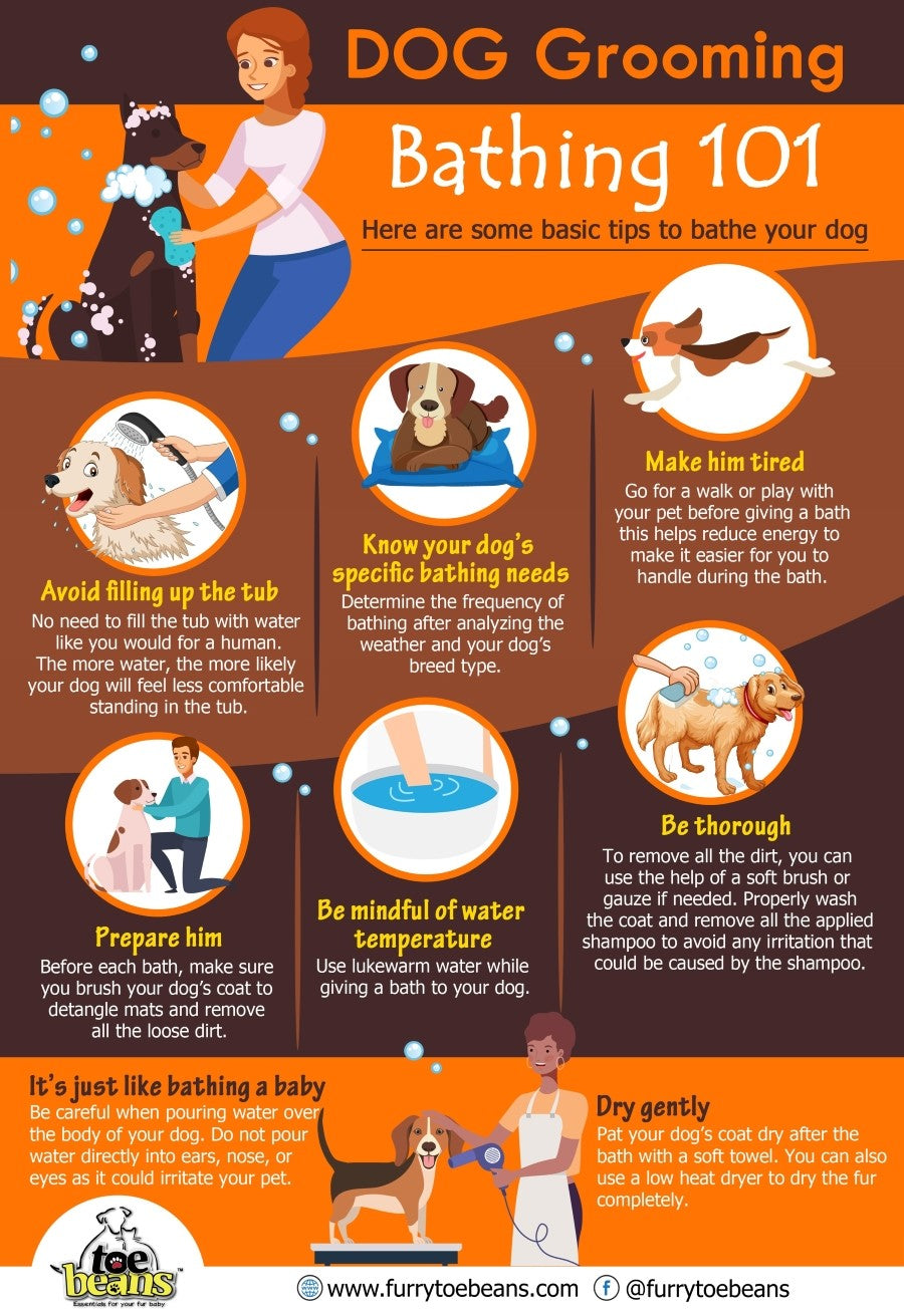 Bathing tips for dogs and puppies