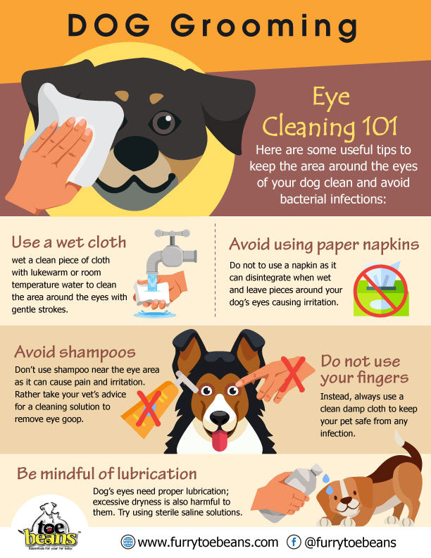 Eye cleaning tips for dogs and puppies