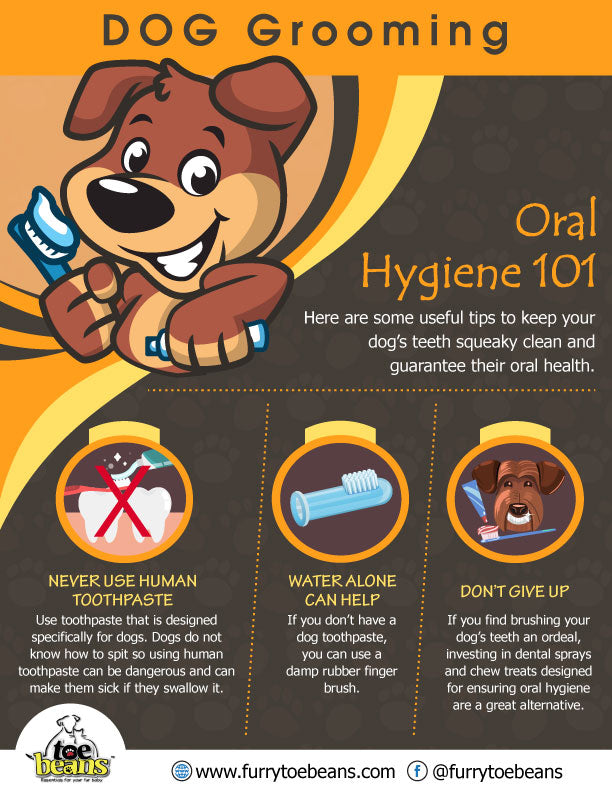 Oral hygiene tips for dogs and puppies