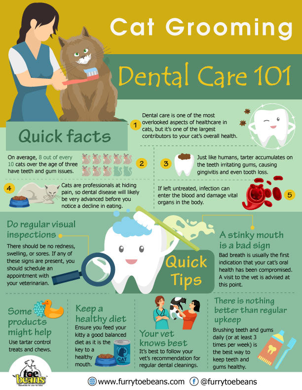 Dental hygiene tips for cats and kittens