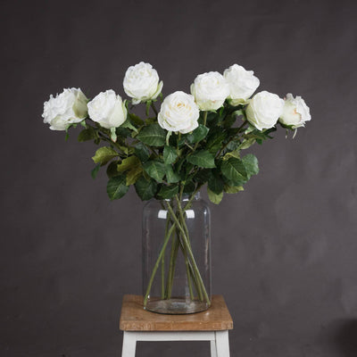 Traditional White Rose - Aurina Ltd